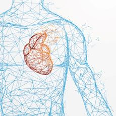 Cardiology Structured Reporting 2020: The Heart of the Matter
